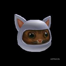 арктический кот ниндзя